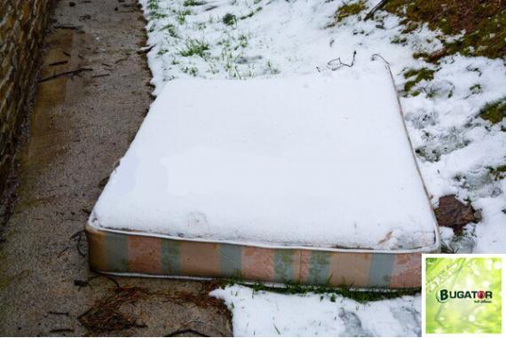 Piqûres punaise de lit en hiver - Bugator