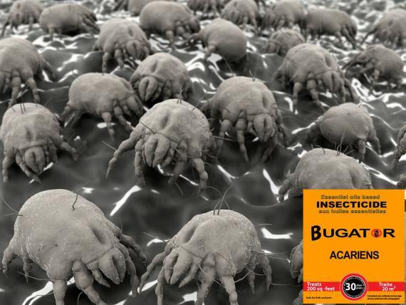 Traitement anti acarien - Bugator